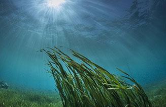 fondo di oceano con alghe marine verdi mosse dalle onde
