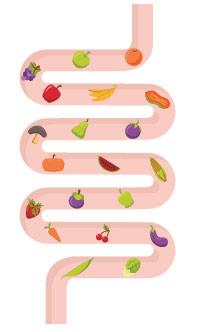 illustrazione di colon sano con frutta e verdura dentro di esso