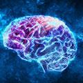 Aumenta la funzione cerebrale