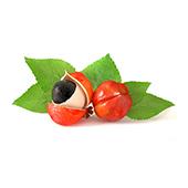 Due frutti di guaranà rossastri. Uno è aperto. Ci sono foglie verdi dietro 3
