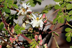 fiori di diverse piante di colore bianco verde e rosa