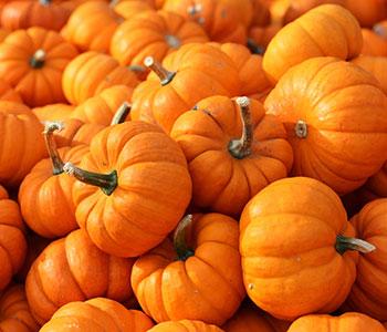 tante zucche arancioni di garcinia cambogia su altre garcinia cambogia