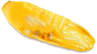foglia lunga e gialla di mango africano su sfondo bianco