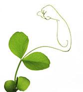 disegno di un muscolo che appare da una piantina con foglie verdi