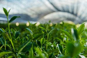 Serra con una varietà di piante verdi. Primo piano di una fabbrica