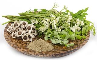 fiori di diverse piante di colore bianco e verde e polvere verde