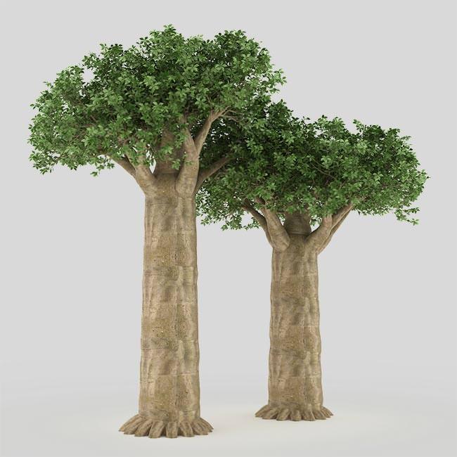 Le Proprietà della Polvere di Baobab