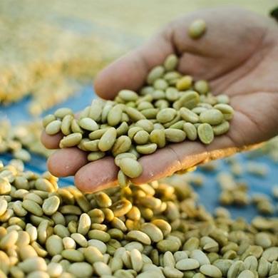 Aiutare la dieta con Green Coffee