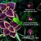 /images/product/thumb/forskolin-5-it-new.jpg
