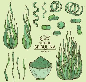 disegno di come trovare alga spirulina in capsule polvere o foglie